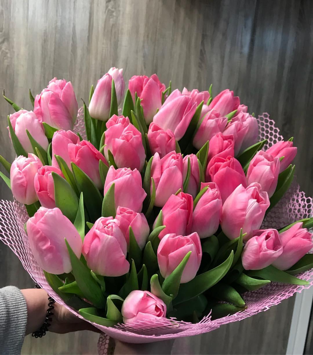 слон фото букетов с тюльпанами дома как сварка дело