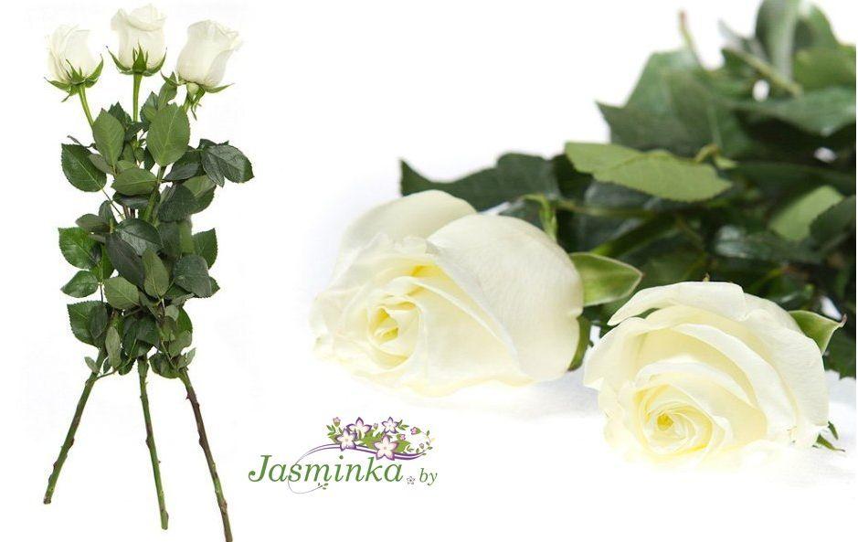 Розы купить гомель